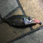 神戸港にナイトアジング調査!神戸ポートタワー周辺って釣れるの?【中央突堤】