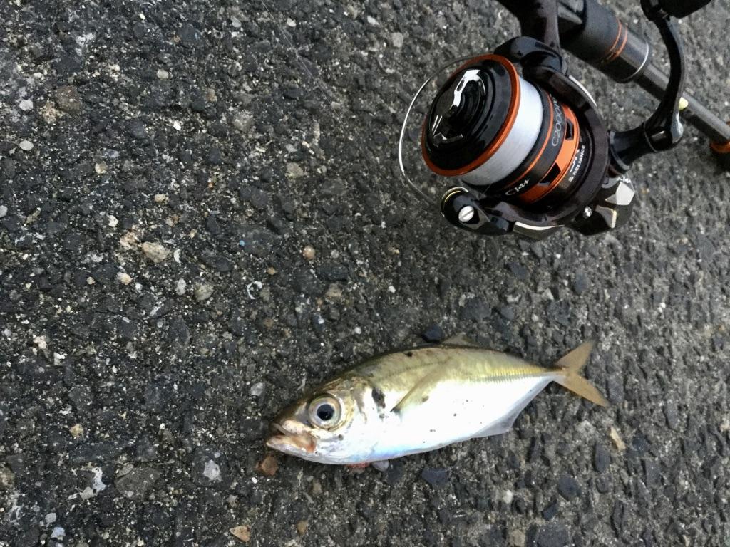 兵庫突堤にデイアジング調査!真昼間にアジを釣るコツって?