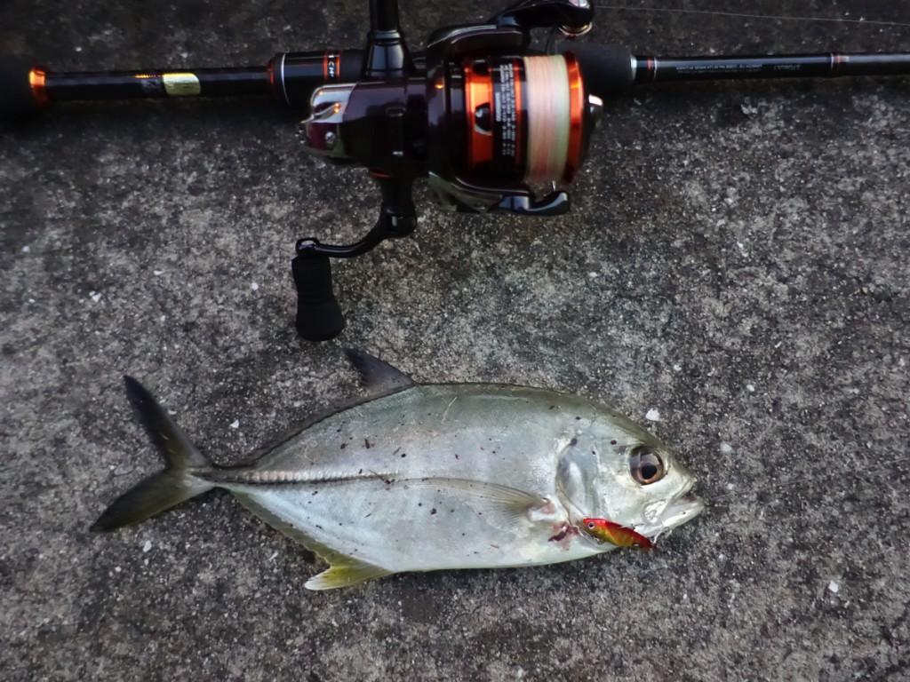 【神戸港湾奥】温排水エリアで、24cmのメッキアジが釣れたよ!