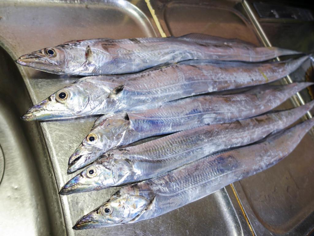 【保存版】タチウオ(太刀魚)のさばき方・刺し身の作り方・美味しくいただくためのコツ