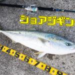 【ショアジギング入門】初心者でも青物が釣れる!タックル選びから釣り方まで徹底解説